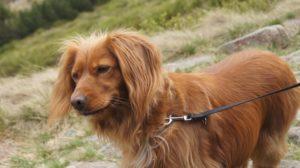 Górski pies Rita na szlaku