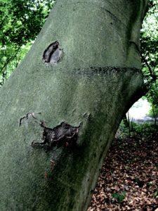 Dziwne drzewa