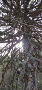 Przyroda Cypru