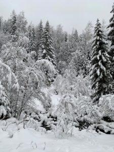 Malownicza zima w Karkonoszach